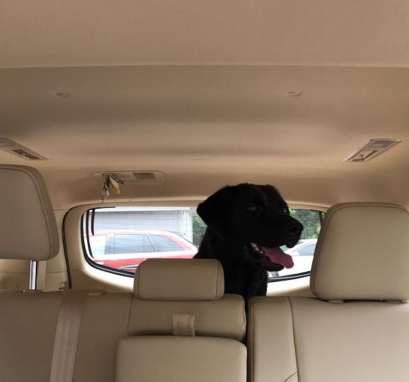 Charlie in car